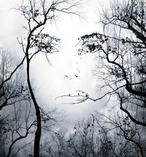 Recapitulation Woman In Trees Illusion